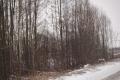 bobry-wycinka-1
